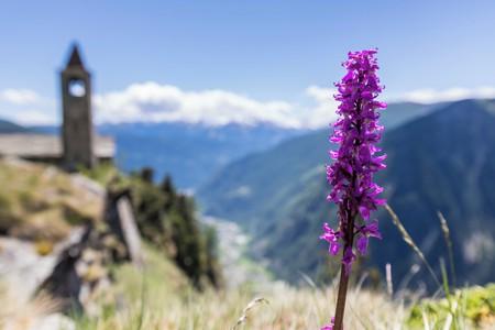 Rest der Welt  Besonders Rifugio Alpe San Romerio image 4
